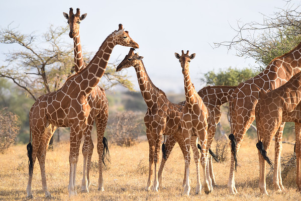 Safari in Samburu National Park