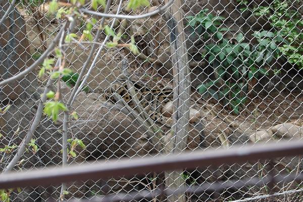 2008 - National Zoo