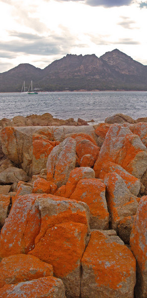 After Port Arthur, we went on to visit the famed Freycinet Peninsula. This is Coles Bay.