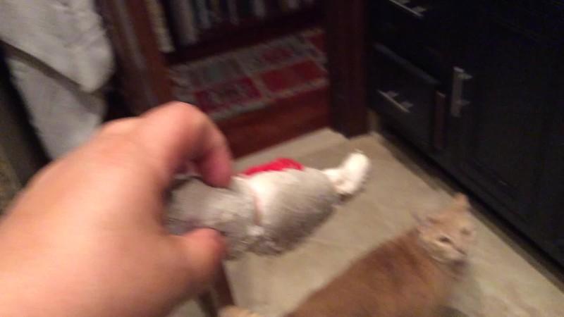 Kitty Videos