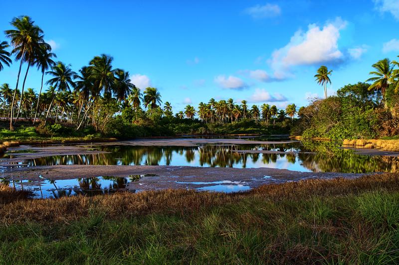 Farm Lake.jpg