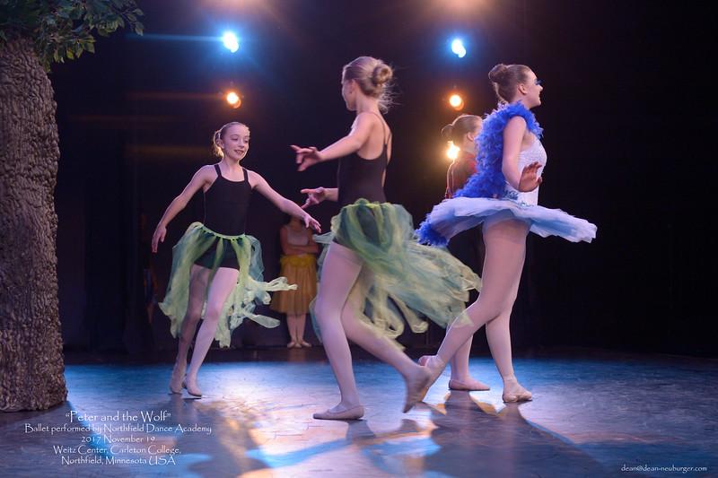 >>Peter and the Wolf<< by Northfield Dance Academy, 2017 November 19 Sunday, Weitz Center, Carleton College, Northfield, Minnesota  USA.