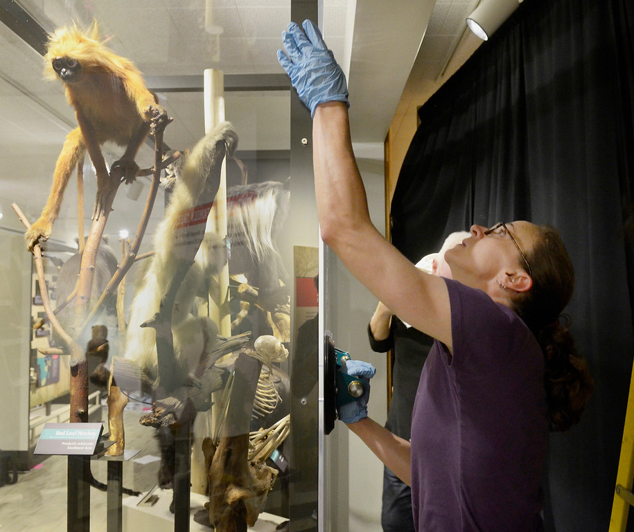 . Jeff Forman/JForman@News-Herald.com Nikki Golembiewski secures plexiglass in place for the primate family display.