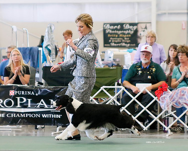 ESSFTA National Specialty Show Galleries