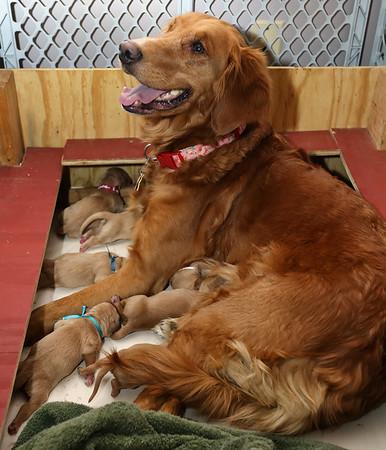 Kaisa (Puppies)