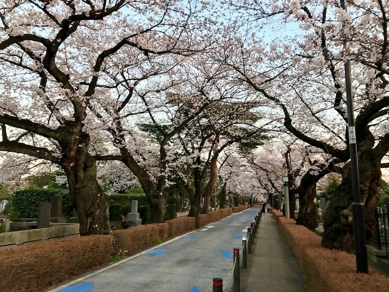 The main avenue at Aoyama Cemetery.