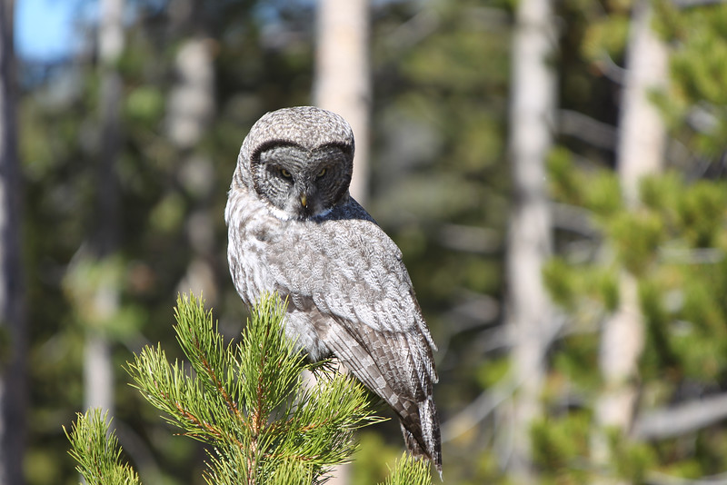 Fall Trip Wyoming & Montana 2016 (90 of 193).jpg