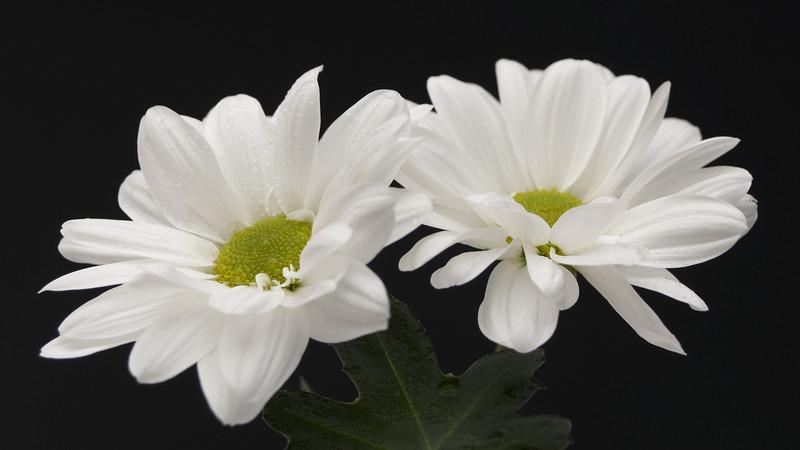 Flowers2 1920x1080 (38).jpg