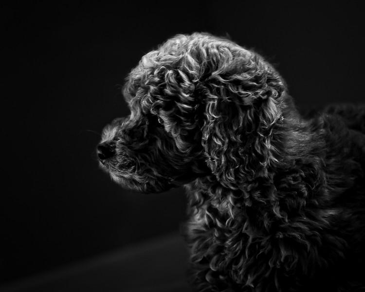 Ollie-14.jpg