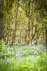 Bluebell Photo Shoot Saturday 5th May Thrift Wood