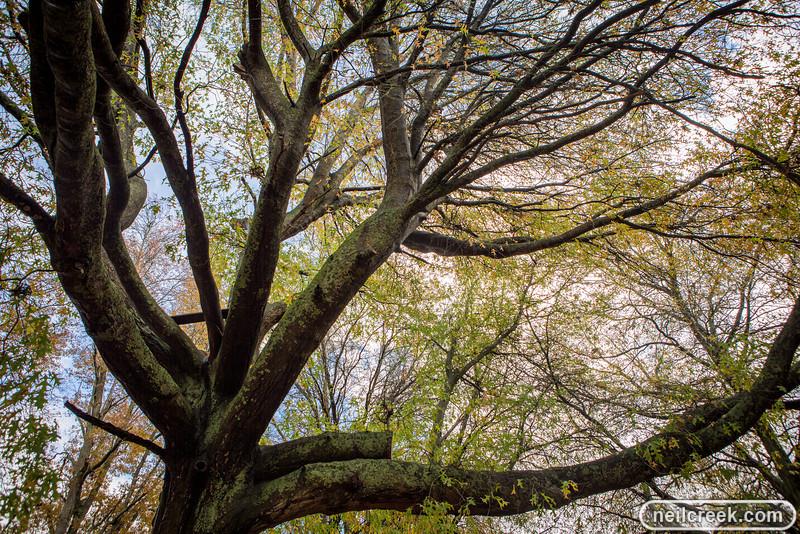 creek-130519-010.jpg