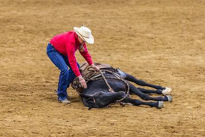 BLM Wild Horse & Burro Festival - 2013