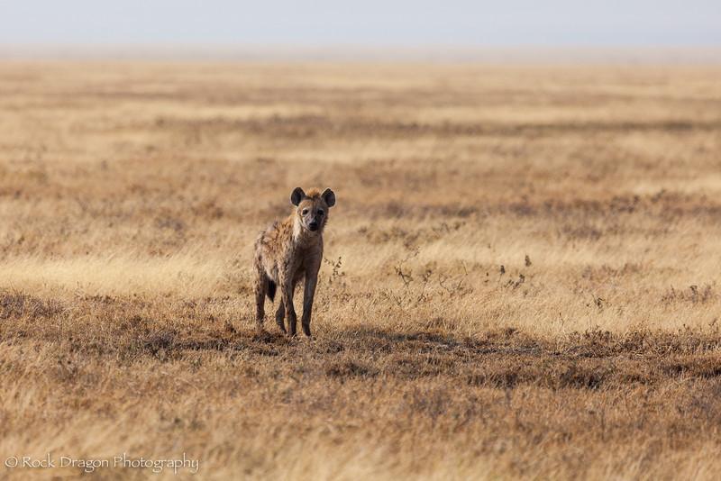 South_Serengeti-19.jpg