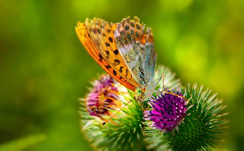 Butterfly-095.jpg