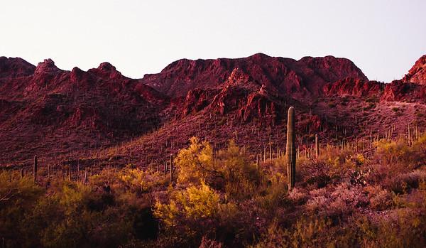 Saguaro Tucson