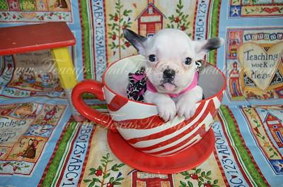 5. French Bulldog Photos and Videos