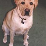 Rowdy 1998