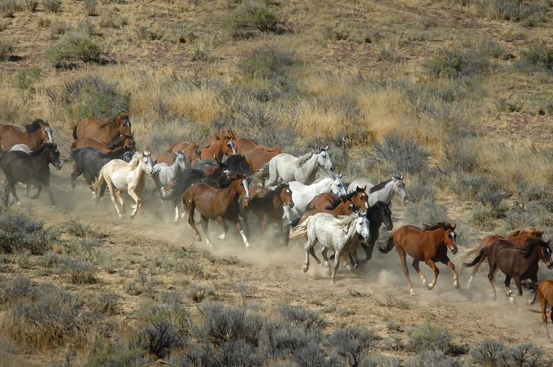 Wild Horses Running #17