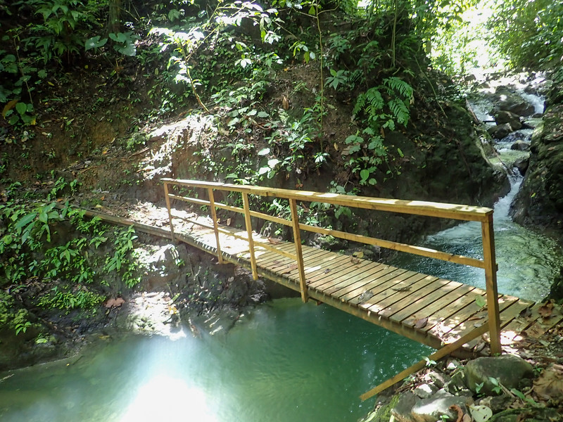 Wooden Bridge in a tropical river in a forest