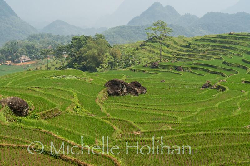 Rice terraces at Pù Luông Nature Reserve, Vietnam
