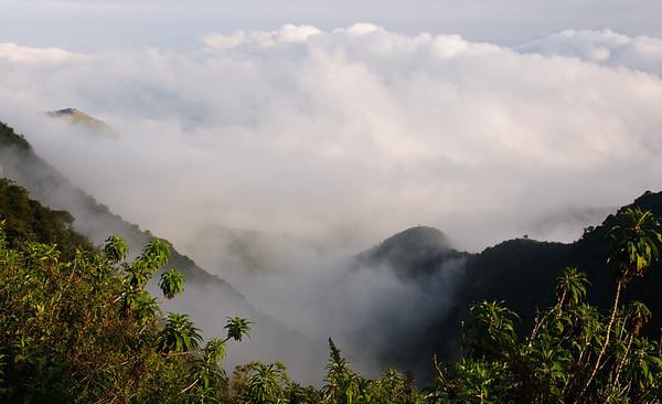 Cloud Forest Ecuador