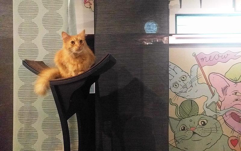 orange cat on tall cat platform