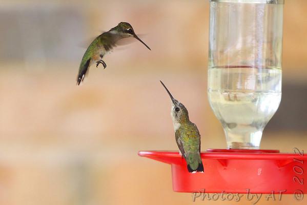 "2012 ""August"" Yardbirds"