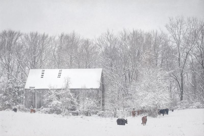 Snow13jan19-1463-Edit.jpg