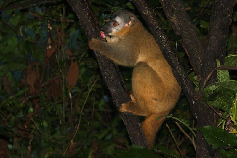 Madagascar, Fauna & Flora 8 Oda.jpg
