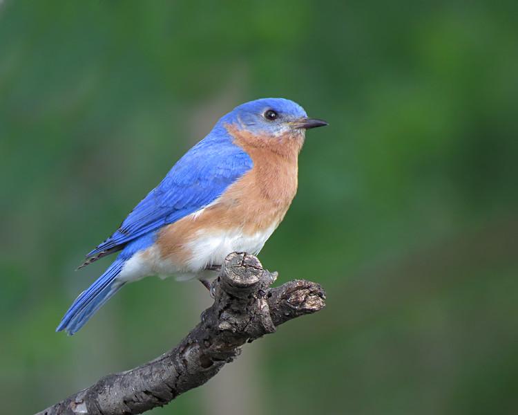 sx50_bluebird_ben_bit_257.jpg