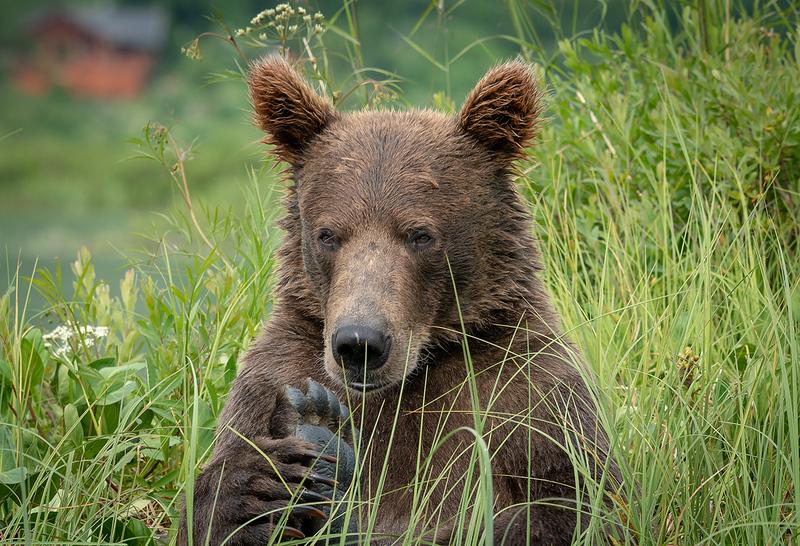 Alaska Bear Trip-6594 Oh my nails need done again.jpg
