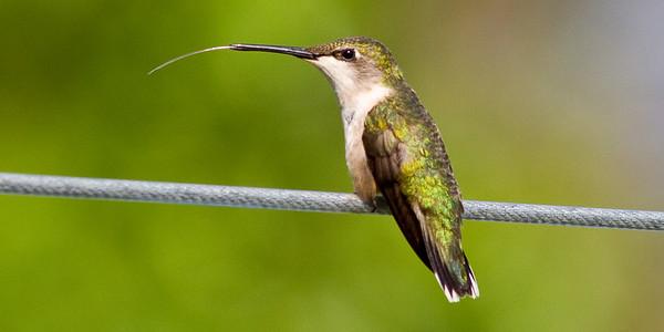 EAGLES and HUMMINGBIRDS