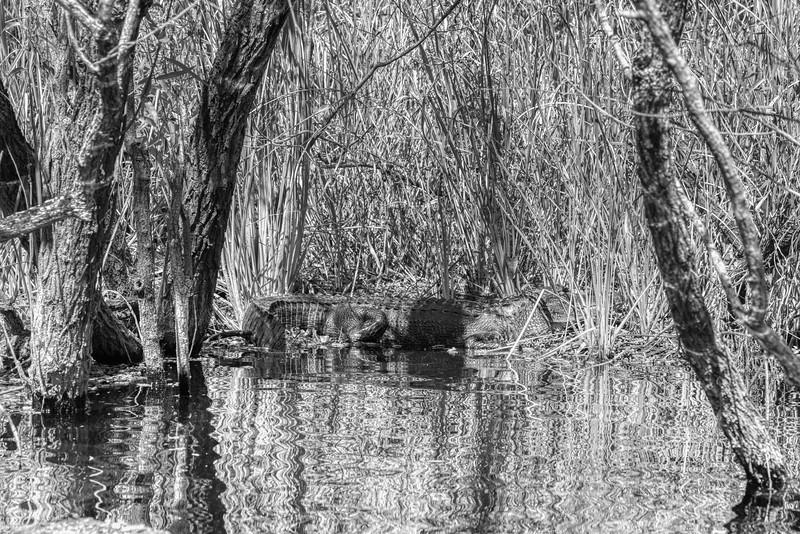 Everglades 2020-13.jpg