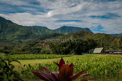 PRINT-COLOR-UNASSIGNED-SILVER-KAUAI FARM-GARY PATE