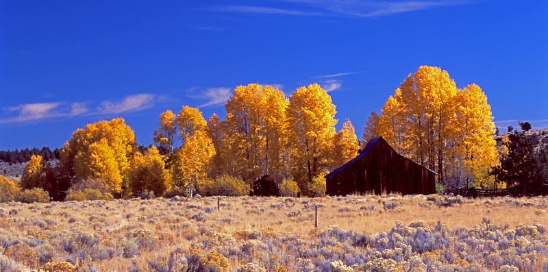 Buck Creek barn and aspen cropd sf.jpg