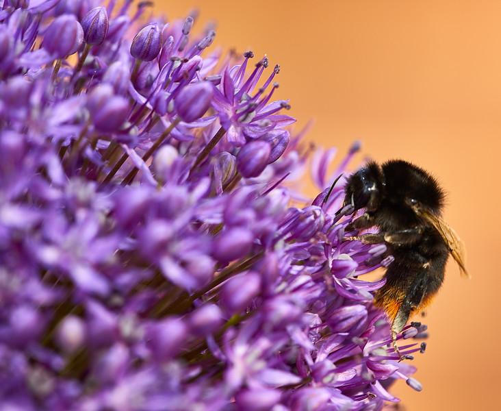 Flowers-5464.jpg