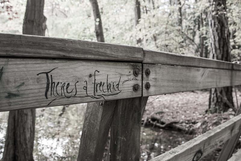 Scout Sope Creek Hike (4 of 22).jpg