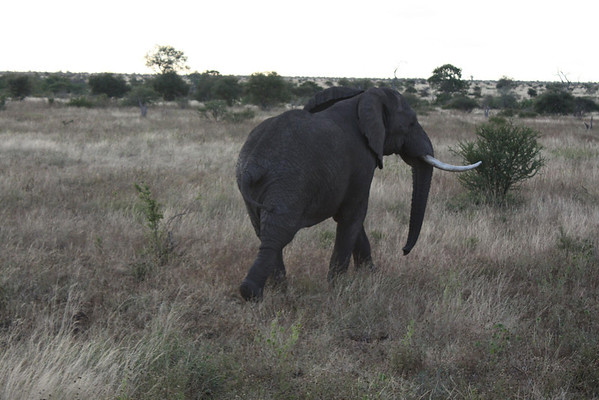 Safari Kruger Park South Africa March 2011