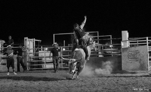 Friday Night Bull Riding