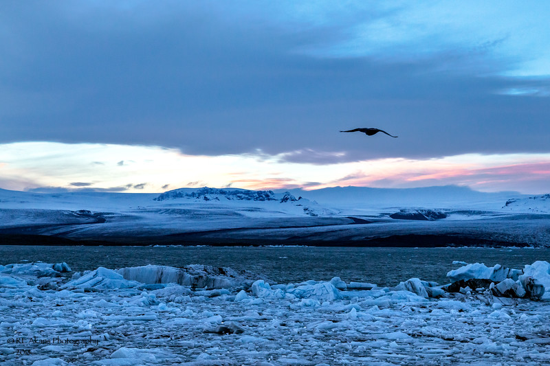 Jokulsarion Glacier Lagoon 7007 LM.jpg