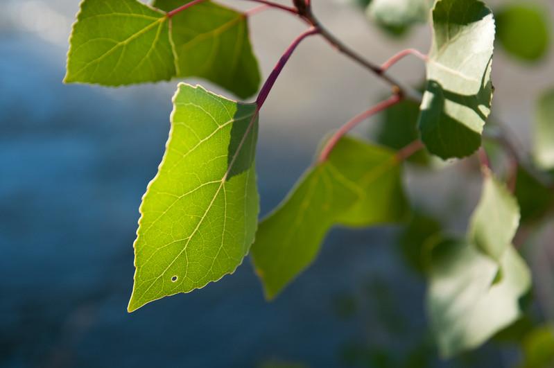 Nature Web portfolio (3 of 47).jpg