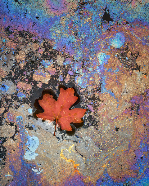 """Maple Mosaic"""