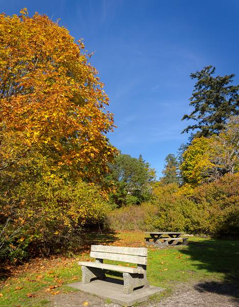 fall bench.jpg