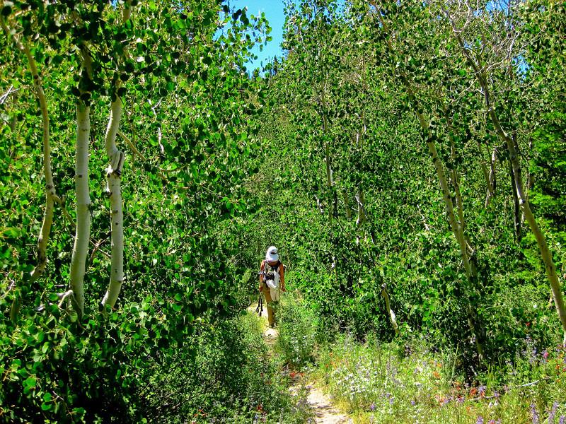 Through aspen grove toward Yost Lake. See map Yellow line