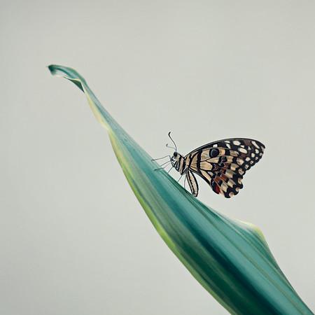 Papillonnades