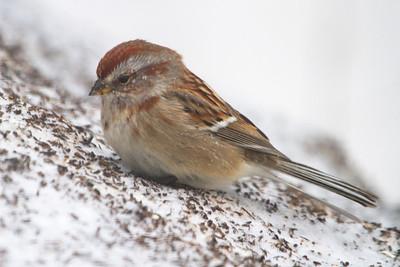 Miscellaneous Birds 2012-2013