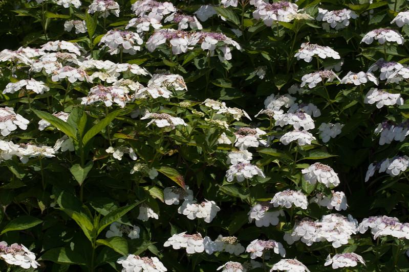 2009 06 30_NY Botanical Gardens_0767.jpg