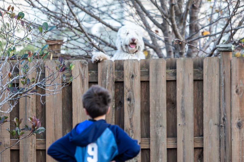 Watson on the Fence-2.jpg