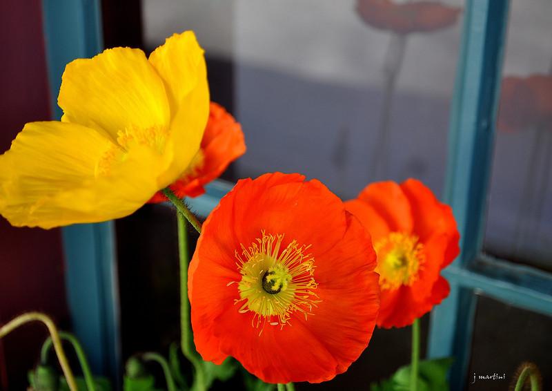 window box 4 4-17-2012.jpg