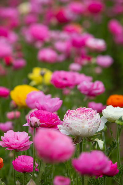 Spring Flowers B-301.jpg